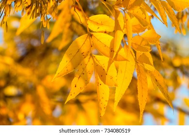 Leaves illuminated by the sun
