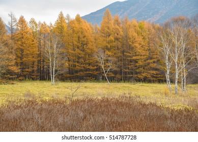 Leaves in Japan autumn season