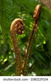 Leaves in the jungle of Sinharaja Sri Lanka