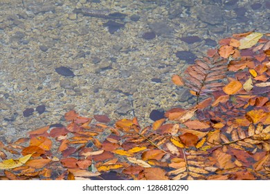 Leaves in lake Laghi di Fusine near Tarvisio in Italy on a sunny morning in autumn