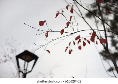 leaves and lamp