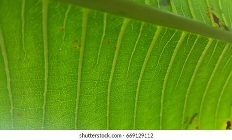 Leaves Leaf line
