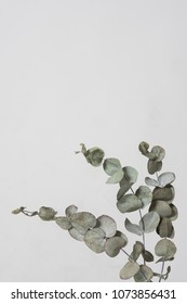 leaves with light grey background. Minimal style design with plants. Abstract background