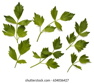 Leaves of lovage on the white background