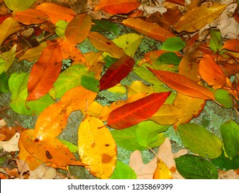 Leaves of many colors create a beautiful scene in southern Wisconsin
