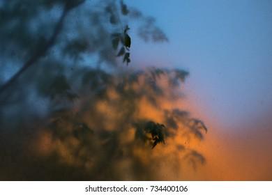 Leaves and Mediterranean skyline seen through sandblasted perspex.