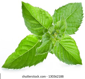 Leaves of mint isolated on white background.