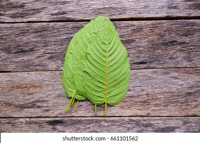 Leaves of Mitragyna speciosa Korth. Located in the family Rubiaceae. The leaves eaten as a drug, medicinal plant and is addictive substance