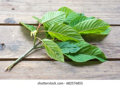 Leaves of Mitragyna speciosa on wooden background.