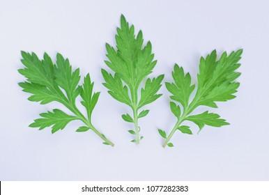 Leaves of mugwort.