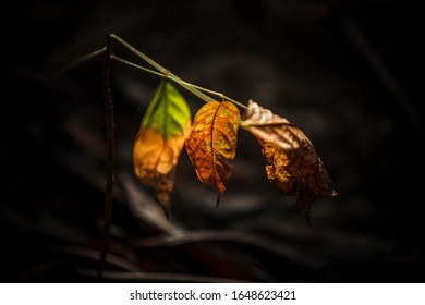The leaves must shine before releasing the leaves.