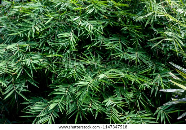 Leaves a natural background in the rainforests to plant to preserve the environment and nature.