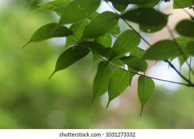Leaves with natural soft background for copyspace. (Selective focusing)