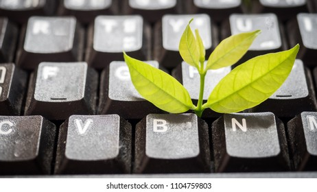 Leaves nature and black keyboard.Small green plant growing from white computer keyboard.Technology with nature concept