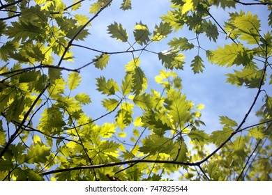 Leaves on blue sky