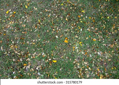 leaves on grass.