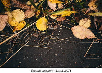 Leaves on the grass. Fallen leaves. Leaf fall. Golden autumn