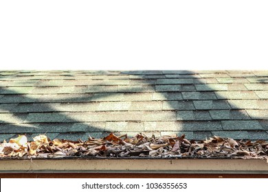The leaves on a green roof