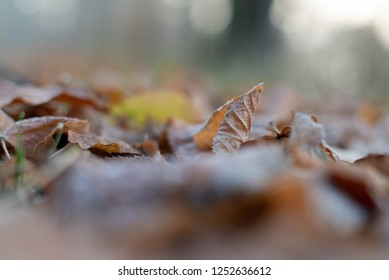 Leaves on the Ground, Atumn, Forest