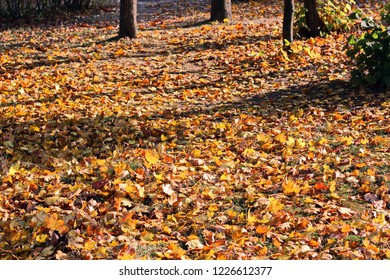 Leaves on the ground in autumn as a background.
