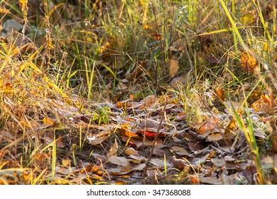 leaves on the ground in the autumn forest