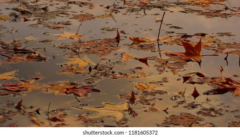 Leaves on the lake