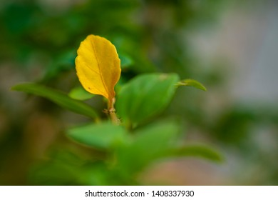 Leaves Turning Yellow Images Stock Photos Vectors Shutterstock