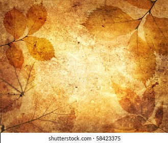 leaves on an old paper