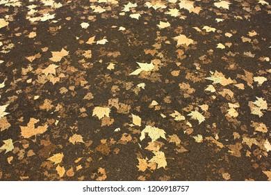 Leaves on the road, Bloomsbury, London, UK