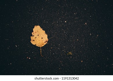 Leaves on the road. Fallen leaves. Leaf fall. Golden autumn