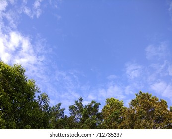 Leaves on the sky (1)
