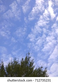 Leaves on the sky (2)