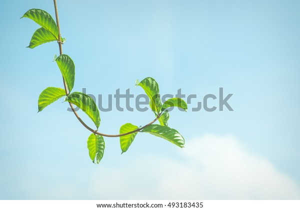 Leaves on sky background presented in shades of vintage style.