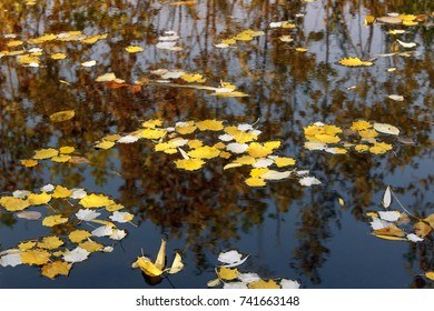 leaves on the surface of water in a dark river, with reflection of the shore