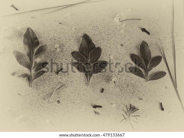 leaves on the table decorated in vintage style