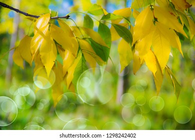 leaves on the tree with a natural green background