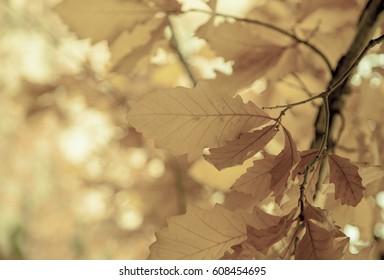 Leaves on a tree a sunny morning, Fall season