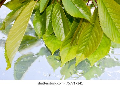 Leaves on water background