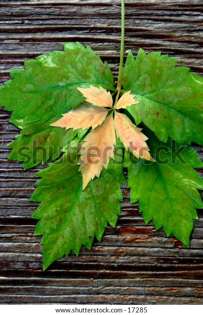 Leaves on wood-1