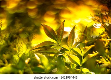 Leaves in a orange and yellow background