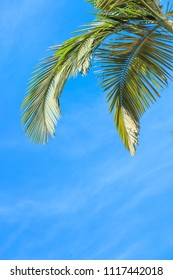 Leaves of palm tree  isolated on blue sky background