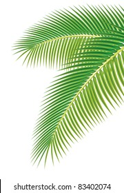 Leaves of palm tree on white background. Raster version.