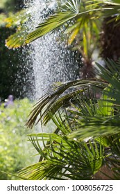 leaves of palm tree with water fountain in background