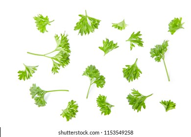 Leaves of parsley isolated on whote background. Collection