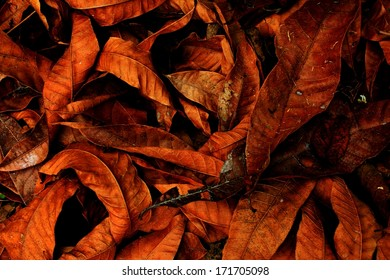 leaves pattern on the texture background