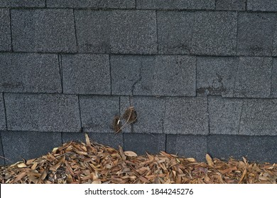 Leaves piled up on a roof.