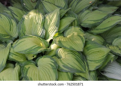 Leaves of a plant.