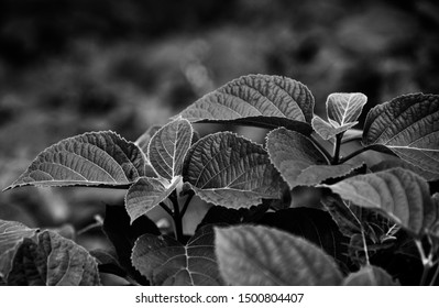 Leaves of a plant black and white natural photo