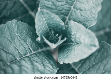 Leaves of a plant close-up, stylized