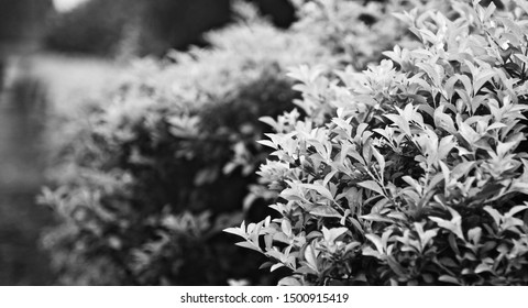 Leaves of plants around a park black and white photo
